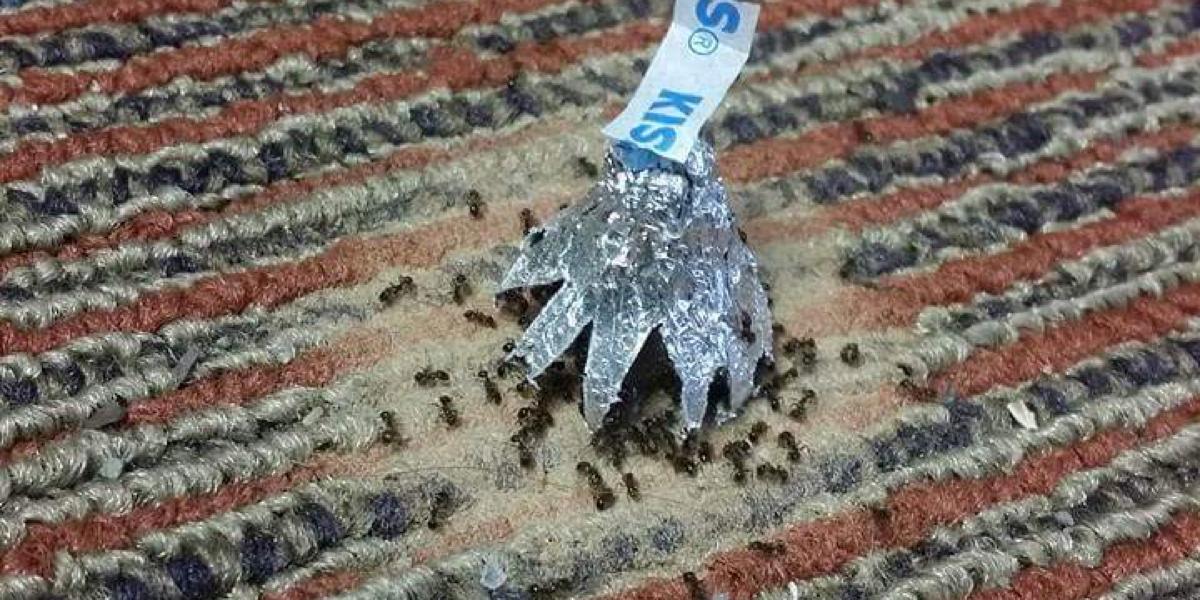 was hilft gegen ameisen im garten wurzelwerk der. Black Bedroom Furniture Sets. Home Design Ideas