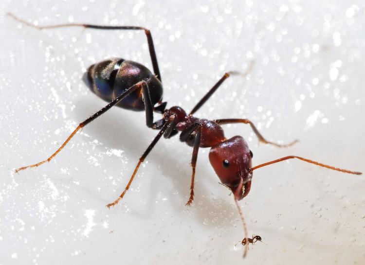 dieser geniale trick hilft gegen ameisen im haus so. Black Bedroom Furniture Sets. Home Design Ideas