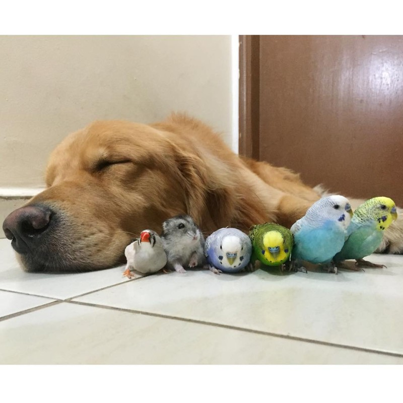 Budgie Who Is Best Friends With A Dog